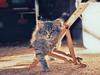IMG_0680_0_0a (d_fust) Tags: fust katze cat skorpi 貓 kat kissa chat კატა gatto 猫 feles katė katt kot кот แมว kočka kedi macska 小貓 kitten killing kissanpentu chaton γατάκι anak kucing gattino 子猫 мысықтың баласы 고양이 catulus बिल्ली को बच्चा katje kattunge kotek котенок gatito ลูกแมว yavrusu cica cô gái nhẹ dạ