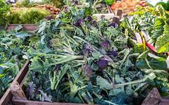 Saturday 20th April, 2013 Brighton & Hove Farmers Market opens on Old Steine, Brighton