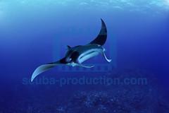 2007 09 CASSOU MALDIVES 11JRCBIO00058