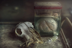 The horror laboratory  ( explore ) (andre govia.) Tags: urban animals dead skull closed heart andre creepy urbanexploration laboratory labs horror jar jars urbex urbanexplorers criminally govia