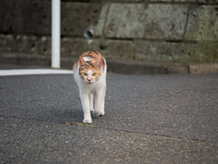 She came to me and bit my fingers (kasa51) Tags: street japan cat lumix olympus panasonic yokohama f28  omd   totsuka em5 35100mm