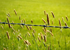 Protected species (gideonc - Thank you for the 1,000,000+ views) Tags: uk field grass landscape scotland nikon barbedwire barbs dslr sedge dormont d3200