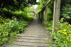 Ashington Cutting (dawn.v) Tags: uk bridge flowers england june path hidden walkway dorset wildflowers footpath poole concealed buttercups corfemullen 113picturesin2013 113picturesin2013project ashingtoncutting