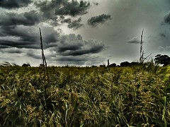 Ominous (SimonTHGolfer) Tags: england sky storm field countryside suffolk sony atmosphere cybershot drama dsc h200 snapseed