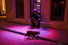 Beyoglu Cat - Istanbul, Turkey (Maciej Dakowicz) Tags: city night cat turkey nightout istanbul nightlife beyoglu