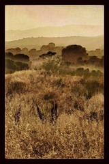 Landscape #3 (wayne kimbell) Tags: painterly santabarbara lanscape pleinair moremesa