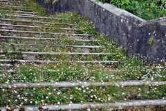 Efflorescent Stairs (floato) Tags: uk flowers england west flower castle beauty stairs britain north cumbria rise tread sizergh floato efflorescent