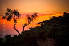 On Top! ( In 2 Making Images | L.A.) Tags: california pink light sunset orange usa tree green water clouds nopeople pines venturabeach dramaticsky ventura venturacounty venturapier venturacoast serracrosspark destinationplace