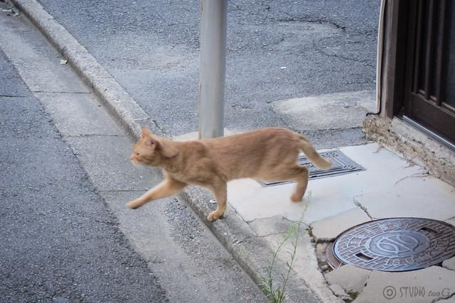 Today's Cat@2013-09-17