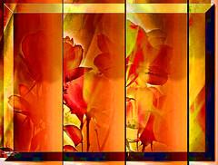 GRADUAL (jawadn_99) Tags: old blue windows red favorite white abstract building green art colors yellow poster interestingness flora flickr photographer vivid scout explore kuwait picnik pinck supershot abigfave saariysqualitypictures coth5 mygearandme