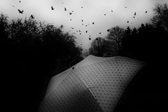 Stockholm, Dots by Edas Wong - Stockholm Skansen Zoo  Dots ....... umbrella pattern, flying birds & water-drops