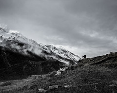 (Nathan A Rodgers) Tags: nepal blackandwhite bw mountain mountains nature monochrome trekking trek river asia hiking hike countries backpacking rivers himalaya annapurnacircuit annapurna himalayas southasia manang 2013 westernregion uppermanang marsyangdinadi