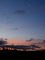 moon in a dawn sky (rospix) Tags: uk pink november blue trees light sky orange cloud moon nature silhouette wales clouds sunrise dawn countryside hills chemtrails climatecontrol 2013 geoengineering weathermanipulation rospix