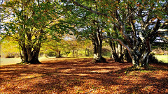 Canfaito (Luigi Alesi) Tags: autumn italy fall nature nikon san italia raw natura severino autunno marche macerata vicino d90 naturale riserva sanseverino faggi faggeta canfaito mygearandme mygearandmepremium mygearandmebronze