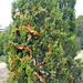 Trees_of_Loop_360_2013_096