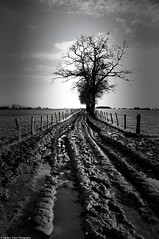 Campagne (Agns Laure) Tags: white black france tree wet water field way eau noir post mud earth horizon trench terre poteau campaign campagne arbre blanc chemin champ boue humide tranche lapalisse rgionauvergne dpartementdelallier sonynexc3