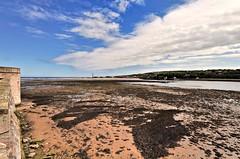 berwick-estuary-01