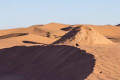 Desert Bird (Ryoushi no syokubutsuen) Tags: art sahara nature landscape desert arabic berber marocco marrakech magrib almagrib medrassa
