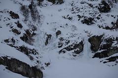 Val Roseg (RS_1978) Tags: schnee snow mountains alps animals alpes schweiz tiere wildlife nieve sneeuw berge neve che neige alpen animaux mammals sn mammalia montagnes vertebrates graubnden samedan   vertebrata wildtiere sugetiere mammifres  wirbeltiere sonycybershotdscrx10 craniota schdeltiere