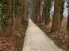 Cycle track (joeke pieters) Tags: holland netherlands oak nederland ivy cycletrack cyclepath klimop eik achterhoek winterswijk fietspad gelderland woold platinumheartaward mygearandme mygearandmepremium panasonicdmcfz150 1130156