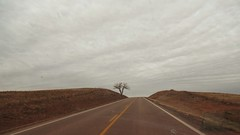 two-lane blacktop road, lonely tree and sky (Eli Nixon) Tags: trees winter sky usa rural buick roadtrip fields crops prairie february roadmaster highplains iso80