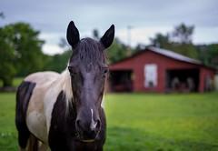 A Horse of Course (Sean Sebastian) Tags: family horse nikon day outdoor farm kentucky 4th july celebration louisville dslr independence d800
