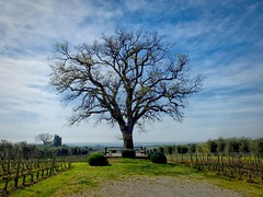 Bolgheri 23 (explored) (lotti roberto) Tags: bolgheri tree albero toscana tuscany winter inverno cielo sky fav25 fav50 fav75 fav100 fav125 fav150