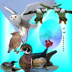 Oiseaux du Québec 4