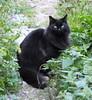 Black cat (Moldovia) Tags: pet black animal cat feline catalog catpix bridgecamera catspotting catmoments catnipaddicts catsunleashed fujifilmfinepixhs50exr