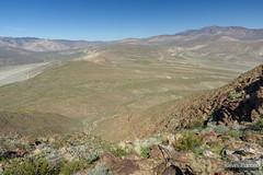 Above Coyote Canyon (kevin-palmer) Tags: anzaborregodesert statepark california sonorandesert spring march nikond750 sunny blue sky tamron2470mmf28 agave borregosprings sandiegocounty coyotemountain hot santarosamountains hendersoncanyon circularpolarizer toropeak