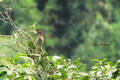 IMG_7620_DS (Ganugapenta NaveenKumar Reddy) Tags: northeast northeastindia mishmihills canon7d disnapper guyonblackybx gnaveenkumarreddy ganugapentanaveenkumarreddy gnr ganugapenta