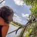 Geoffroy's tamarin monkey - wild titi monkeys gamboa panama pandemonio 2017 - 20
