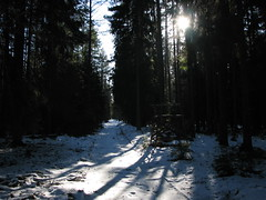 Smarde_forest_01