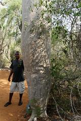 DSC07422_DxO werden oft mit Baobabs verwechselt_Bildgröße ändern (Jan Dunzweiler) Tags: madagaskar africanbikers reniale renialareserve jandunzweiler
