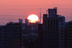 "Tokyo SkyTree at Sunrise(View from 30km away) (seiji2012) Tags: 東京スカイツリー 塔 日の出 国立市 東京 シルエット ""tokyo skytree sunrise silhouette tokyo kunitachi"