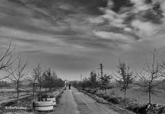 IL VIALE DELL'AMOUR:-)) (Roberto.mac.) Tags: ilviale amour bwfantasiadelbw paesaggi landscapes amore baci robertomac