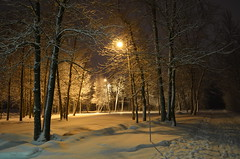 The cold nights of March (Captions by Nica... (Fieger Photography)) Tags: weather winter storm snow snowstorm trees nature branches night nighttime parc path outdoor cold march quebec canada landscape