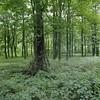 Derwent Rescan (brettjasonlittle) Tags: kodak portra 6x6 mediaumformat trees tree green landscape derwent september hasselblad 120 forest woodland woods sticks