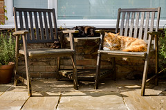 "Sunbathers (Stephen Reed. ""Over 1 Million Views Thanks"") Tags: cats mainecoon spring sunshine compost nikon d7000 lightroomcc"