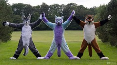 It's #FursuitFriday and because I would like to show a photo with my friends, I chose this one ^-^ #CharliesAngels with my best friend Arco Fluffypaw and WereFox Aries :3 The photo was taken by Morkai Pawpad Media (Keenora Fluffball) Tags: keenora fursuit furry kee