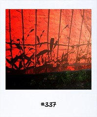 "#DailyPolaroid of 22-8-13 #337 • <a style=""font-size:0.8em;"" href=""http://www.flickr.com/photos/47939785@N05/9635611926/"" target=""_blank"">View on Flickr</a>"