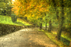 Time to change the wiper blades (Darrell Wyatt) Tags: autumn trees color rain drop windshield