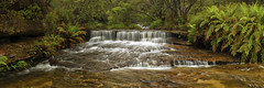 Queens Cascade - Wentworth Falls (Damien Seidel) Tags: panorama west nature waterfall sydney bluemountains panoramic ferns wentworthfalls queenscascade nikond800e schneiderpctssuperangulon50mmf28lens