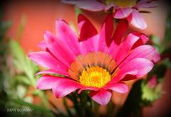 . . .PER VOI AMICI DELLA SARDEGNA ! ! (Clic - Fany Romano) Tags: flowers light naturaleza flores primavera canon garden arboles colores fiori colori giardino laplata arbusto blinkagain bestofblinkwinners blinksuperstars fanyromano