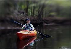 Congaree Swamp (Ed.Stockard) Tags: sc lensbaby kayak paddle southcarolina swamp cedarcreek congaree congareenationalpark