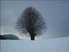 on one's own ... (ruschi_e) Tags: schnee snow tree clouds schweiz switzerland wolken baum langenbruck ruschie oltusfotos