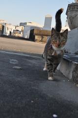 StLouis 3- kitty1