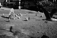 Untitled (ajkpix) Tags: california park street people urban blackandwhite bw blackwhite losangeles pigeons blackwhitephotos scattidistrada