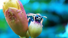 236macro (Hegyaljai Imre) Tags: macro insect makro insekten rovar makr rovarok hegyaljaii