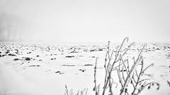 Strange undefined white substance... (Fr@nk ) Tags: schnee winter bw snow cold holland ice netherlands landscape europe neige glace dhiver apsc sonynex5 mrtungsten62